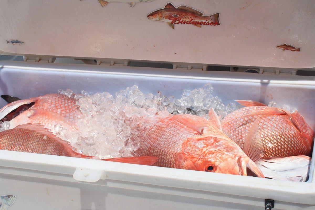 receta fácil y rica de pescado a la veracruzana