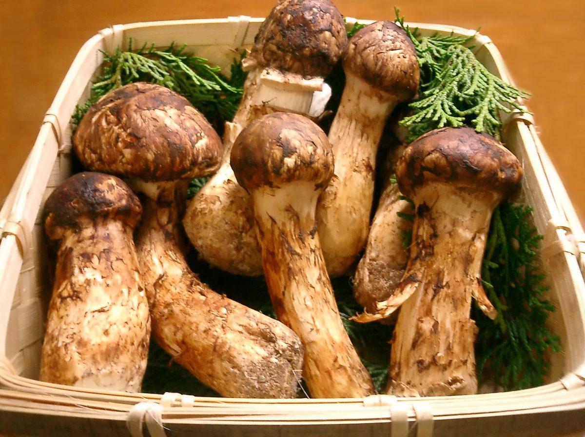 alimentos más caros y exóticos del mundo hongo matsutake