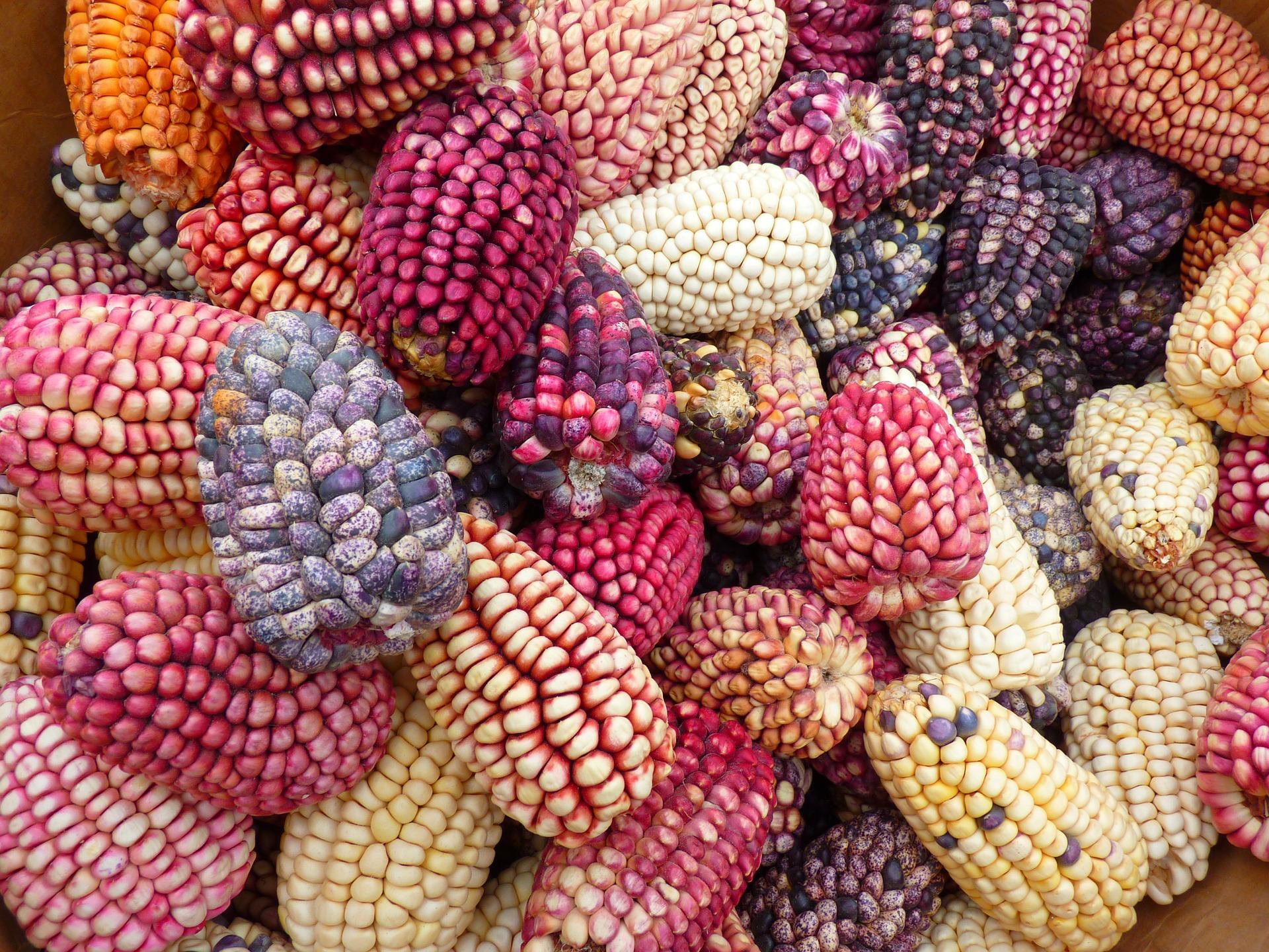 Comida de Tlaxcala