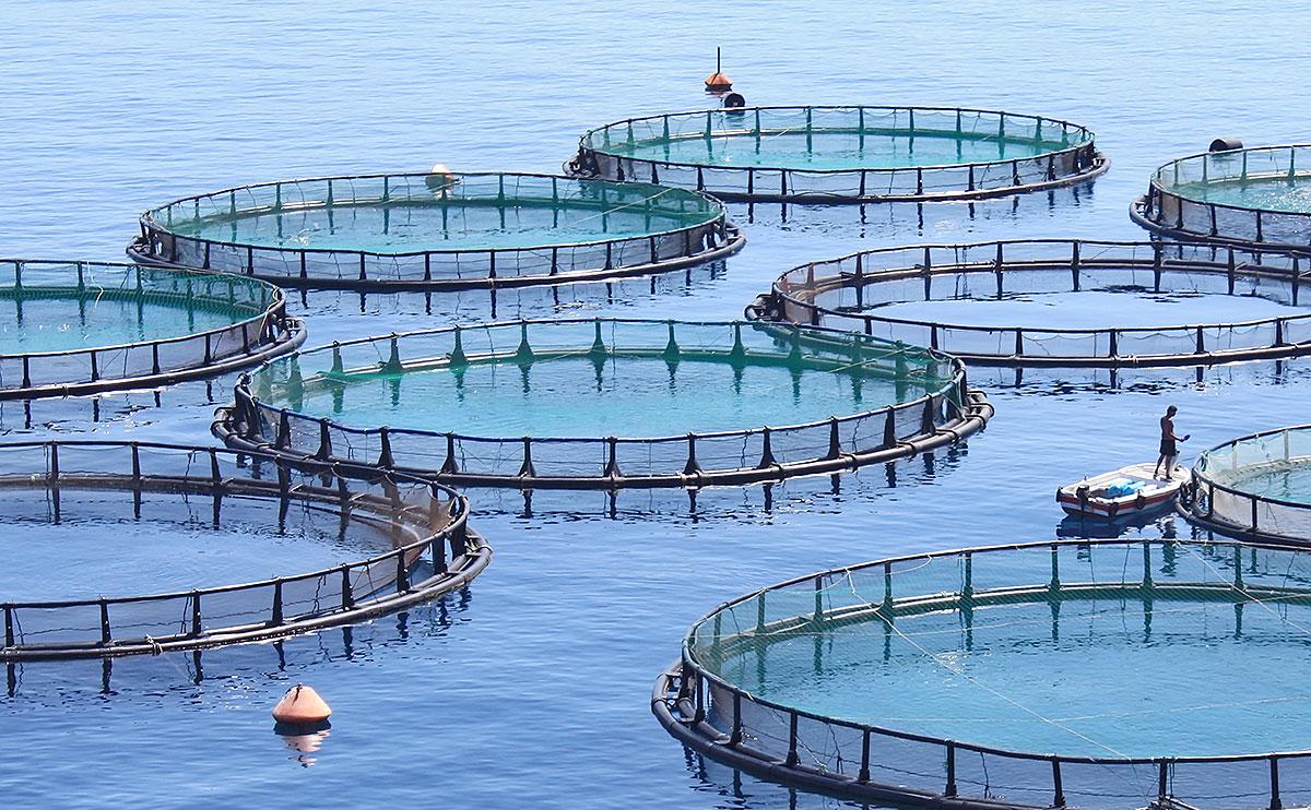 pescados de granja y salvajes