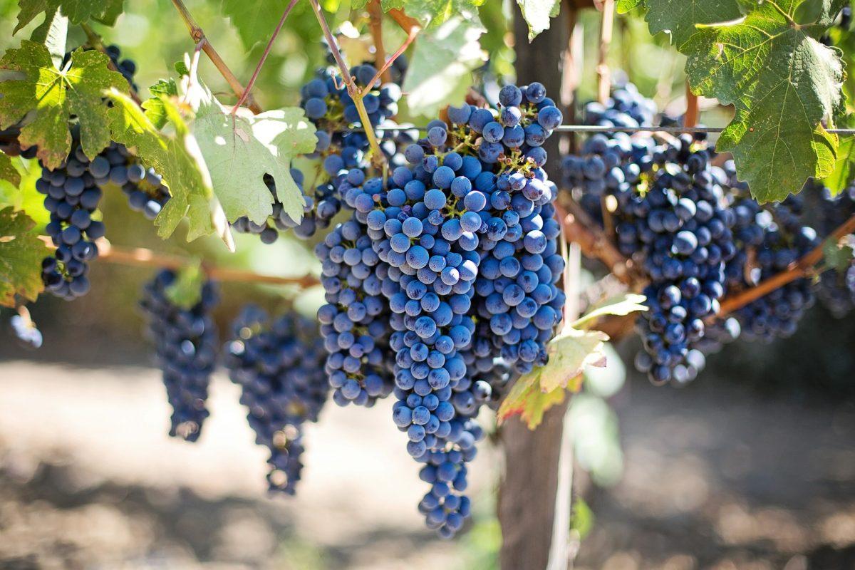 vinos de Oregon