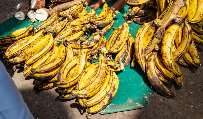 variedades plátano