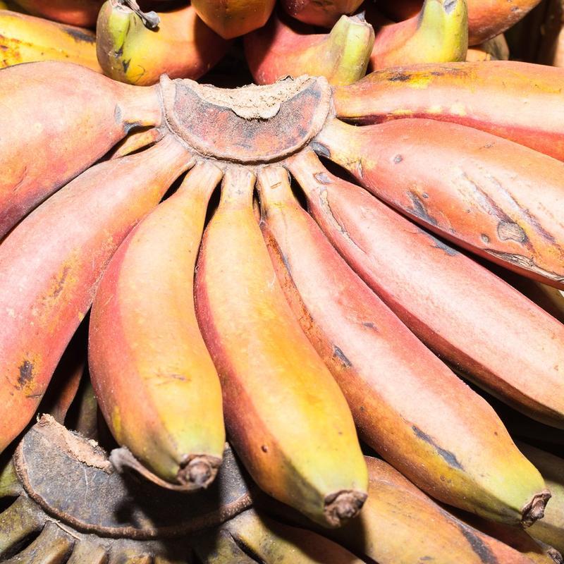 plátano morado