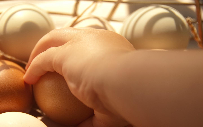 conservar y elegir huevos