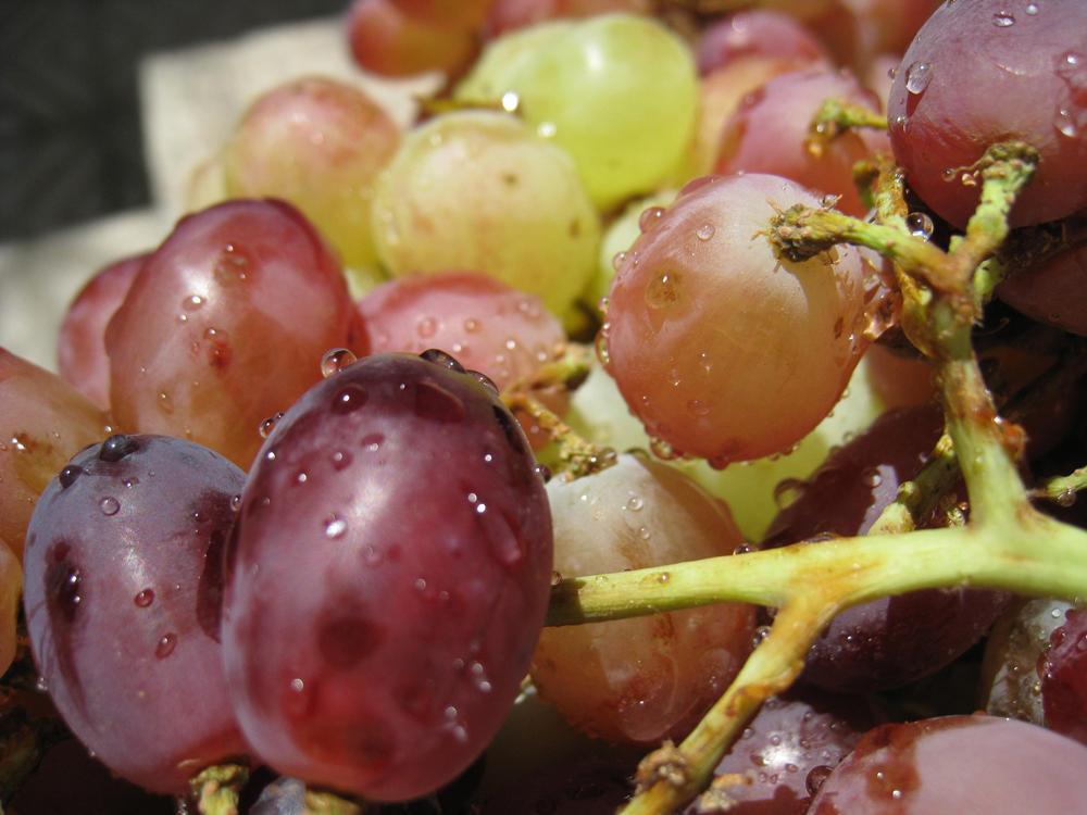 enología enóloga vino