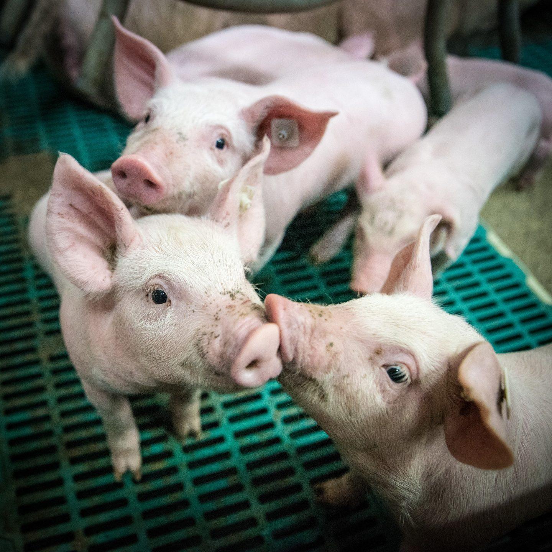ganadería contaminación medio ambiente