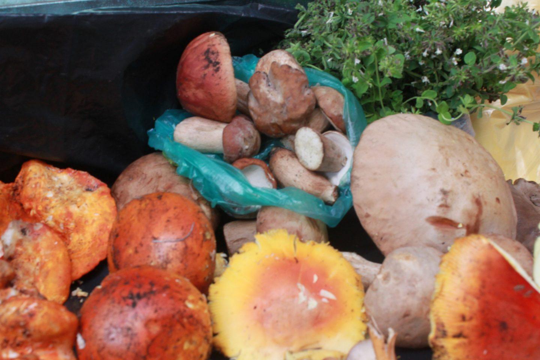 hongos silvestres comida mes patrio lugares