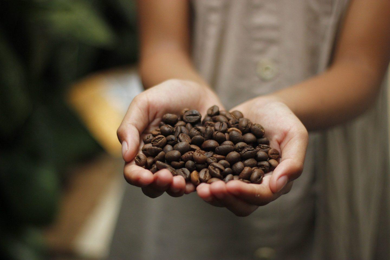 café mexicano cooperativas