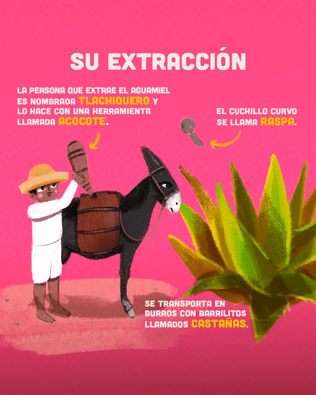 datos pulque
