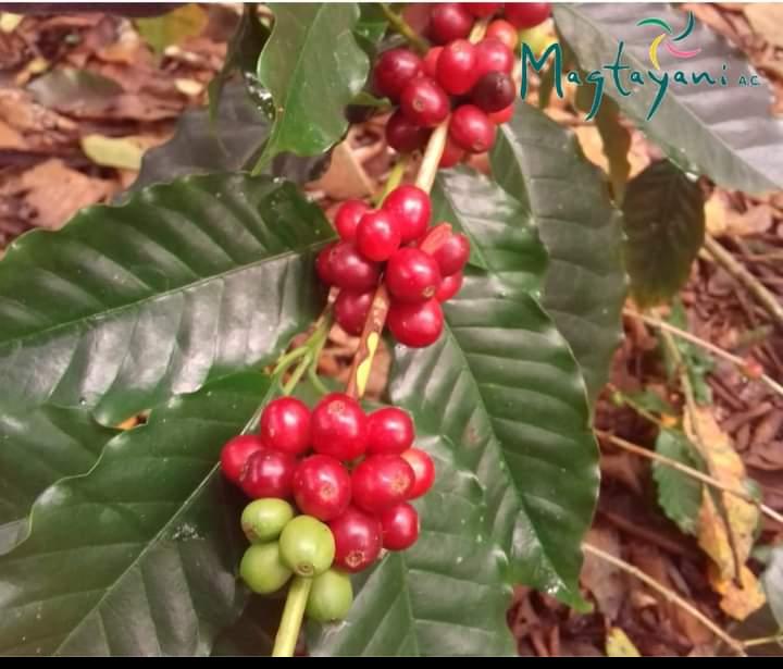 comercio justo magtayani café mole veracruzano